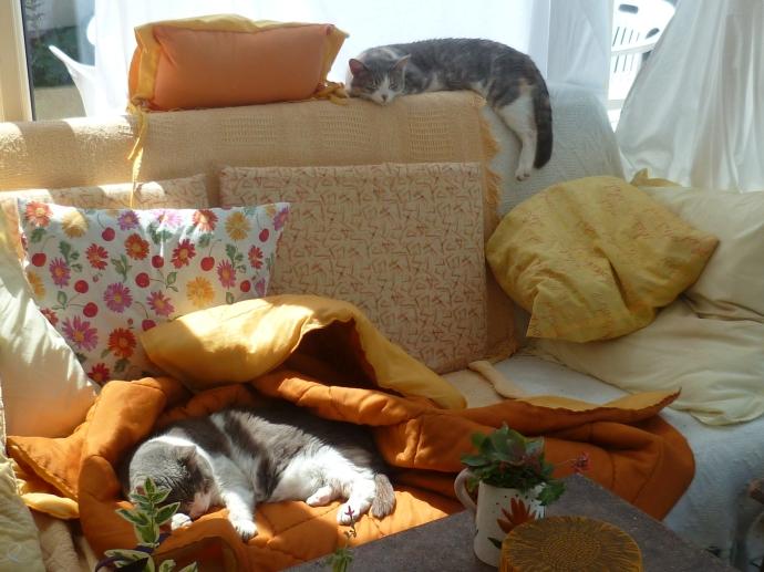 fleurs et chats Cordouan 407