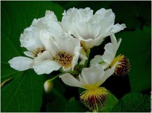 bouquet fleurs blanches serres