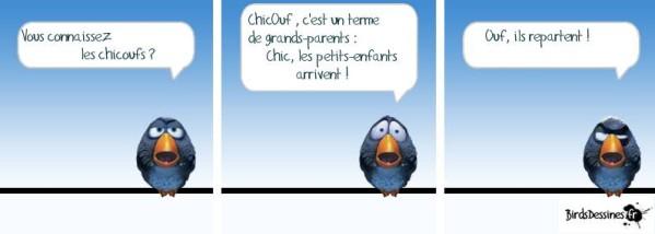 OISEAU BIRDSs-chicouf