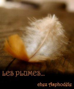 PINGPONGplumes-aspho-4-c3a8me-tirc3a9-du-tumblr-vanishingintoclouds